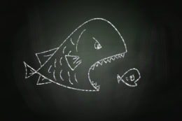 big-fish-small-fish